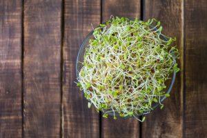 رژیم سبزیجات   لاغری با سبزیجات پر پروتئین و خوشمزه