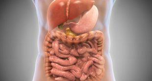 پروبیوتیک | راه هایی برای افزایش باکتری های خوب روده
