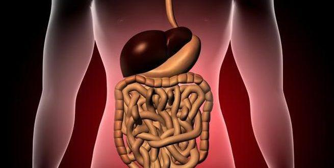 علت اضافه وزن | باکتری های روده مقصر اصلی چاقی !